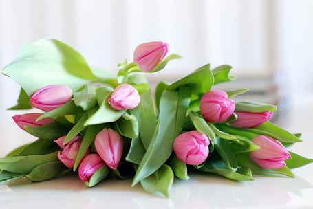 Фото Розовые тюльпаны лежат на столике (© Феминистка), добавлено: 13.07.2012 19:02