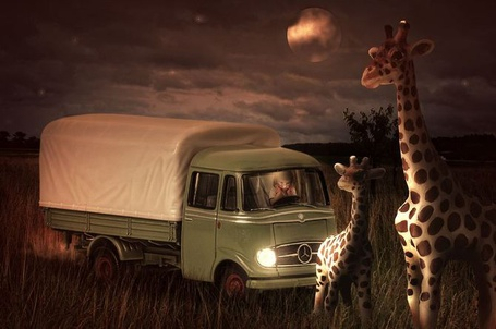 Фото Два мультяшных жирафа в саванне, и маленькая девочка наблюдающая за ними из грузовика марки Мерседес / Mercedes, сюрреалистические работы John Wilhelm / Джон Вильгельм
