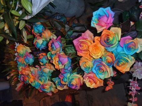 Фото Разноцветные розы (© Еж-Конопатый), добавлено: 18.07.2012 17:01