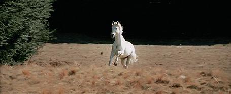 Фото Белый конь скачет по полю (© StepUp), добавлено: 19.07.2012 11:51