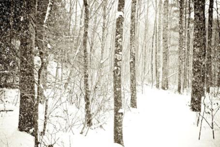 Фото Лес под толщей снега, фотограф Joy StClaire (© Кофе мой друг), добавлено: 22.07.2012 12:18