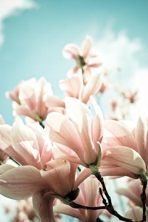 Фото Бутоны розовых цветов на фоне неба, фотограф Joy StClaire (© Кофе мой друг), добавлено: 22.07.2012 12:40