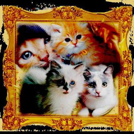 Фото Милые котятки в рамочке (© D.Phantom), добавлено: 23.07.2012 13:15