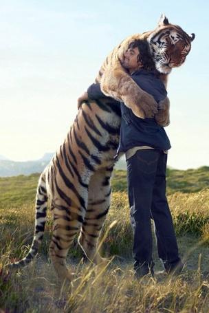 Фото Человек обнимает тигра (© Julia_57), добавлено: 26.07.2012 09:37