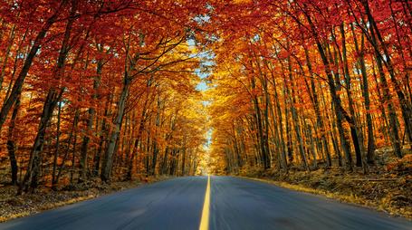 Фото Осенние деревья вдоль дороги (© Danusha), добавлено: 26.07.2012 12:09