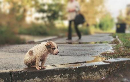 Фото Бедный, мокрый щенок  (© FAKE), добавлено: 28.07.2012 21:53