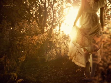 Фото Девушка приподняв платье идёт босиком по осеннему лесу, впереди на тропинке сидит кот. Фотограф Kassandra (ЕлкаВизерская) (© Natko), добавлено: 31.07.2012 19:14