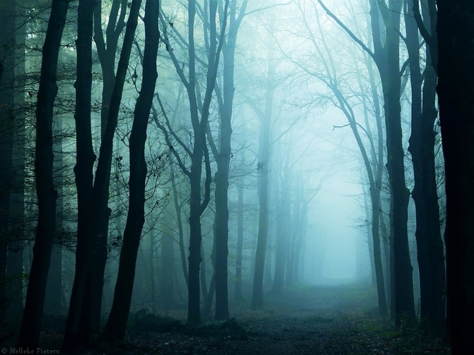 Фото туманная пустая дорога сквозь