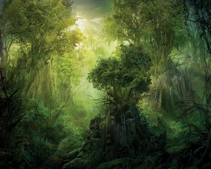 лесной уголок фото