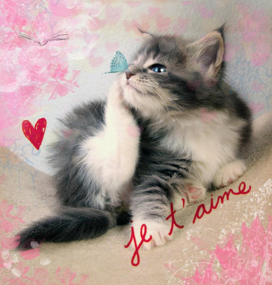 Открытка с кошками люблю тебя