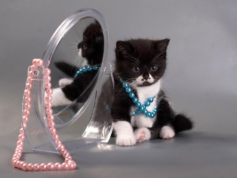 такими картинки котики с украшениями мечтает петь сцене