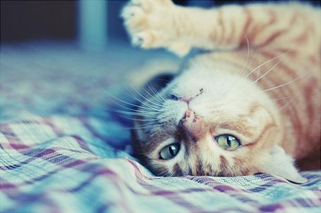 Фото Рыжий кот лежит на кровати (© Радистка Кэт), добавлено: 03.08.2012 00:57