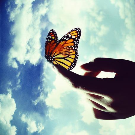 Фото Бабочка на пальце руки на фоне облаков (© Natko), добавлено: 03.08.2012 01:02