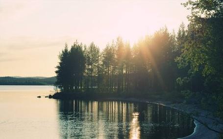 Фото На берегу спокойной реки растут деревья