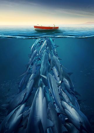 Фото Акулы разных размеров ринулись к пустой красной лодке в океане, Ahmed Othman STUDIO (© Radieschen), добавлено: 06.08.2012 13:56
