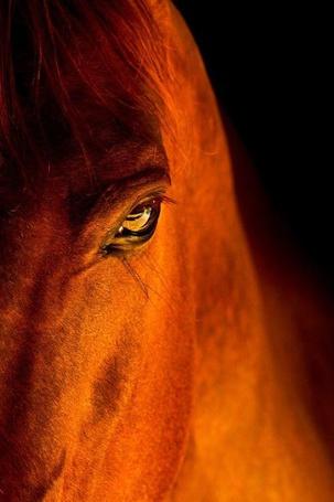 Фото Красивый глаз лошади
