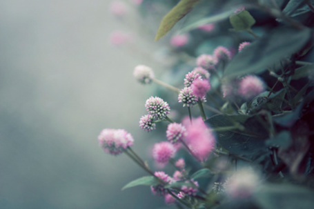 Фото Куст с розовыми цветами, фотограф Rachel Bellinsky (© Кофе мой друг), добавлено: 12.08.2012 11:57