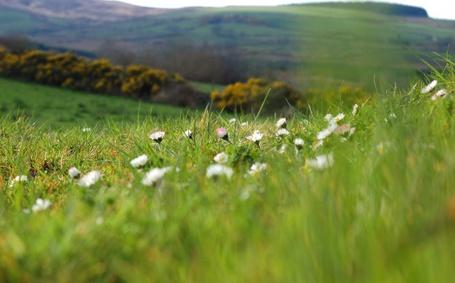Фото Холм, на котором растут ромашки (© Girl), добавлено: 12.08.2012 18:25