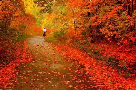 Фото Осенний, красный лес и дорога, по которой едет велосипедист