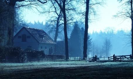 Фото Одинокий дом среди деревьев и елок, фотограф Неллеке Питерс / Nelleke Pieters