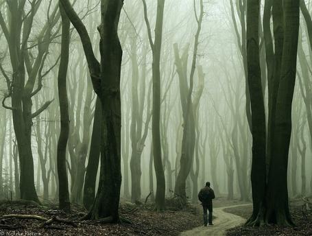 Фото Одинокий путник в зловещем туманном лесу, фотограф Неллеке Питерс / Nelleke Pieters (© Radieschen), добавлено: 22.08.2012 17:58