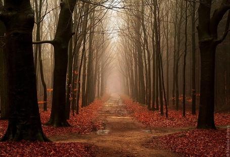 Фото Деревья в лесу сбросили сухие листья, фотограф Неллеке Питерс / Nelleke Pieters (© Radieschen), добавлено: 24.08.2012 08:22