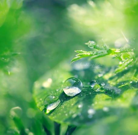 Фото Капли росы на листьях (© Кофе мой друг), добавлено: 24.08.2012 22:17