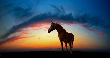 Фото Лошадь на фоне красивого заката (© Sveta_Sherer), добавлено: 26.08.2012 11:33
