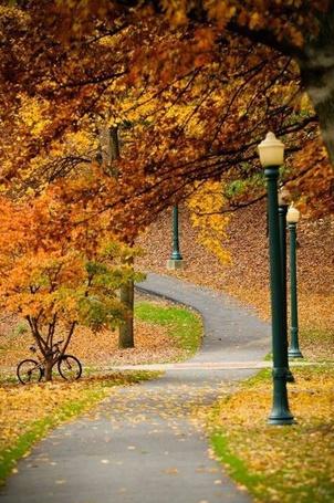 Фото Аллея в осеннем лесу, рядом с деревом стоит велосипед