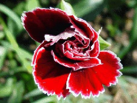Фото Множество красивых цветов появляется на экране (© Anatol), добавлено: 11.09.2012 15:29