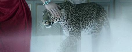 Фото Девушка в красном с драгоценным браслетом на руке гладит леопарда