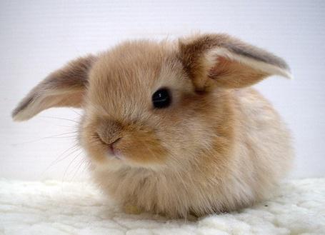 Фото Милый кролик (© StepUp), добавлено: 21.09.2012 22:28