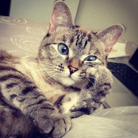 Фото Прикольный задумчивый кот (© Sveta_Sherer), добавлено: 29.09.2012 02:20
