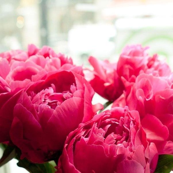 Ярко розовые пионы