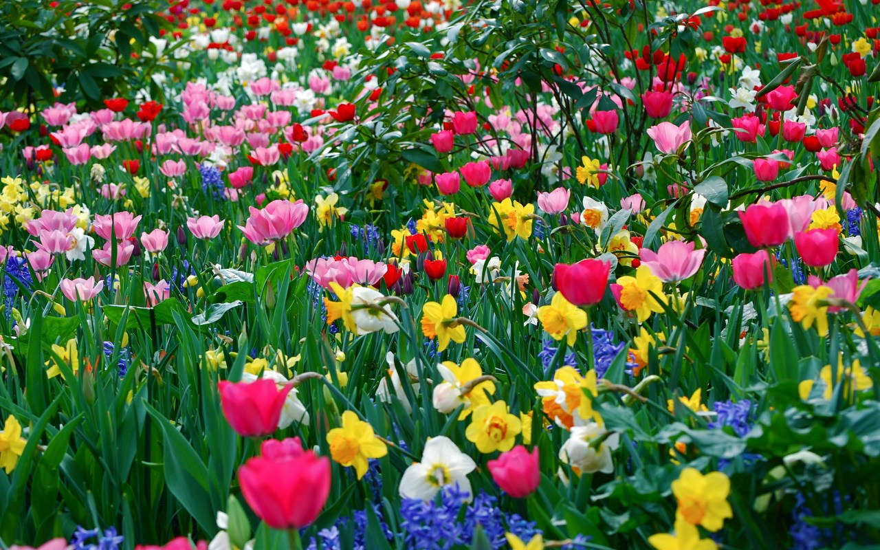 Image result for фото весенних цветов