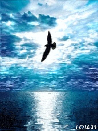 Фото Птица пролетает над рекой (lola31)