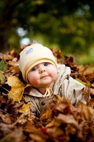 Фото Милый ребенок сидит в опавших осенних листьях