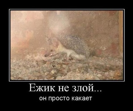 Фото Ёжик не злой...Он просто какает (© Флориссия), добавлено: 08.10.2012 21:46