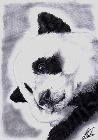 Фото Портрет панды (© Кофе мой друг), добавлено: 13.10.2012 11:18