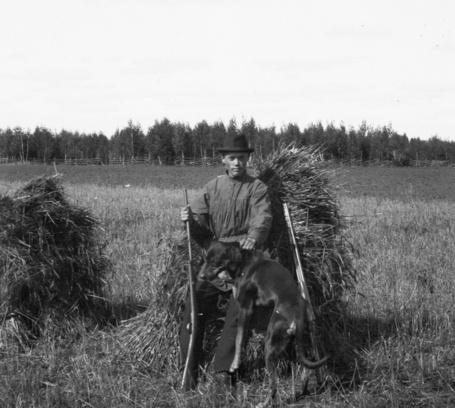 Фото Охотник с собакой возле пшеничных снопов, сложенных в суслоны