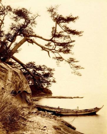 Фото Деревья, нависающие над обрывом у берега озера, и рыбацкая лодка