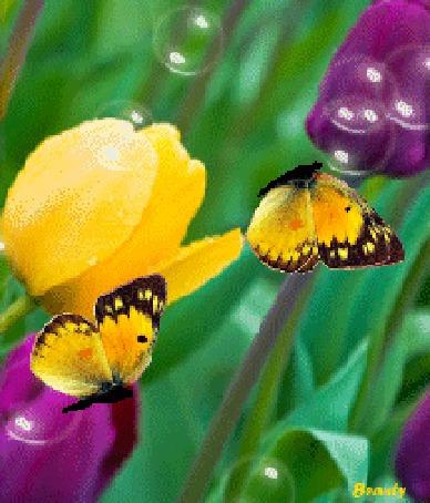 заставка на телефон бабочка порхает крыльями анимация № 422 загрузить