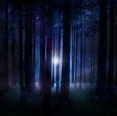 Фото Ночь в лесу (© ), добавлено: 27.10.2012 01:51