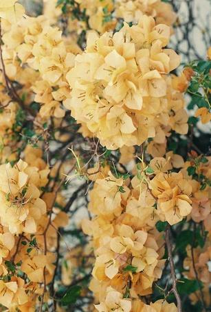 Фото Красивые желтые цветы (© ), добавлено: 27.10.2012 11:47