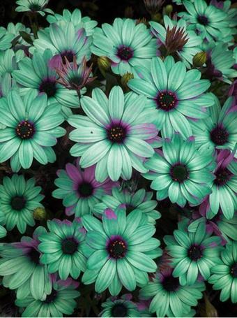 Фото Красивые цветы зеленого окраса (© ), добавлено: 28.10.2012 10:10