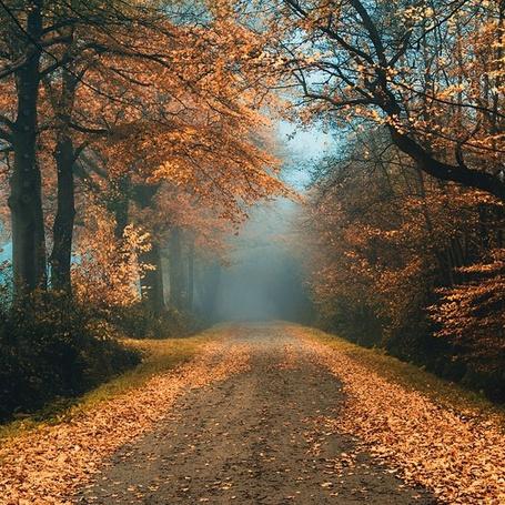 Фото Усыпанная желтыми облетевшими листьями дорога в лесу (© Morena), добавлено: 28.10.2012 21:00