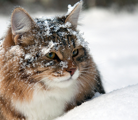 Фото Кошка, сидящая на снегу
