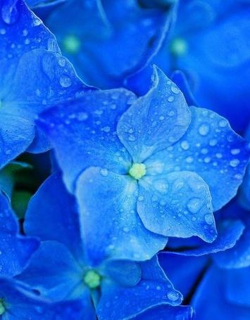 Картинки цветы с росой
