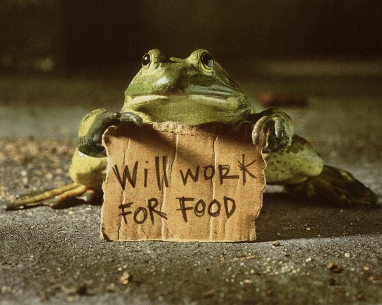 Фото Зеленая лягушка держит табличку с надписью Will work For Food / Буду работать за еду