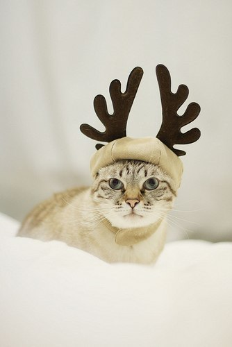 Оленьи рога своими руками для кота